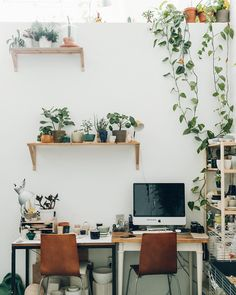 A desk worth going to work for; take a tour of Rena and Sam's jungle studio for ultimate #workspacegoals now up on our website. #HaarkonInterior #HaarkonInAmsterdam