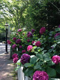 Gardens:  Upper Main Street, Nantucket border #garden.