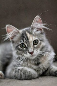 The 5 Most  Prolific Cat Breeds in the World