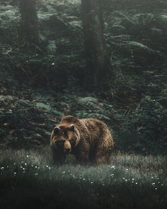 woods bear by Andrés Calvo Jr. nature woodland photography, green brown haunting wilderness wild woods bear by Andrés Calvo Jr. Wildlife Photography, Animal Photography, Wild Photography, Canon Photography, Beautiful Creatures, Animals Beautiful, Animals And Pets, Cute Animals, Tier Fotos
