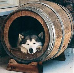 A wooden barrel can make a cozy home for your pet.