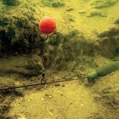 Subsurface evolution: Chod rigs - Articles - CARPology Magazine