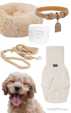 Cute Dog Collars, Leather Dog Collars, Dog Collars & Leashes, Dog Accesories, Small Dog Accessories, Puppies Accessories, Leather Accessories, Cute Dog Beds, Best Dog Beds