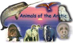 Animals of the Arctic activities