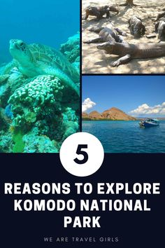 5 REASONS TO EXPLORE KOMODO NATIONAL PARK - If you ever have the chance to visit wonderful Indonesia, make sure you head to Komodo National Park. This UNESCO World Heritage site is lies east of Bali and features komodo dragons, legendary scuba diving, and http://www.deepbluediving.org/suunto-zoop-novo-vs-suunto-zoop/