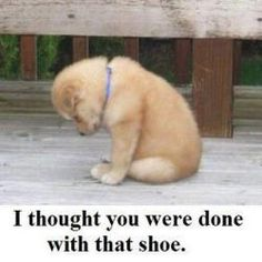 k i don't normally love the animal quotes but this one made me giggle plus that is one cute puppy!