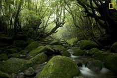 """Moss Forest"""