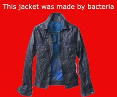 Would you wear a jacket made by bacteria?  This jacket was made by a company called BioCouture. They use a mixture of yeast and bacteria, which produce a substance called cellulose. They then produce clothing from this bacterial cellulose. The clothing is entirely biodegradable and compostable.