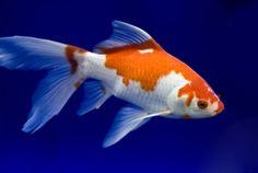 Zijaanzicht vis