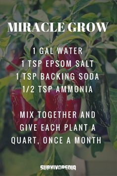 Miracle Grow recipe