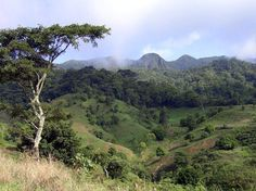 Cameroon, a country in the tropical belt of Africa, has large areas of forest. [File photo]