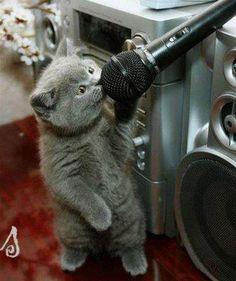 Karaoke cat - let's rock & roll!
