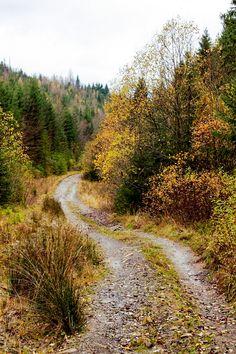 Mountain Forest Road (Ukraine) by Pavlo Kuzyk