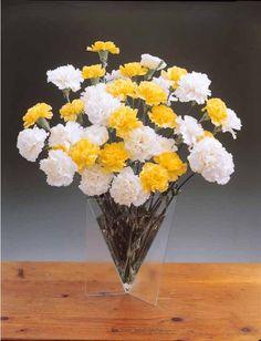 #Oeillets des fleuristes blancs