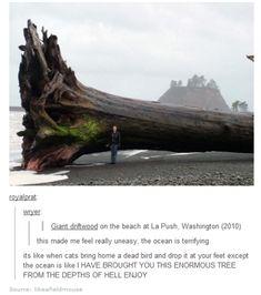Ocean driftwood... Tumblr