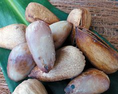 "Australian native superfoods: bunya nuts Bunya nuts are a rich source of protein. They ""can be used as a substitute for flour, great for peo. Australian Plants, Australian Food, New Zealand Food, Native Foods, Artisan Food, Herb Seeds, Tropical Fruits, Edible Plants, Fruit And Veg"