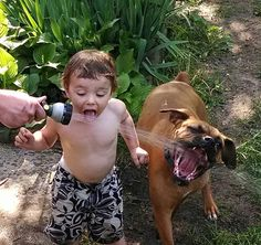 Little boy and dog drinking from hose; summer