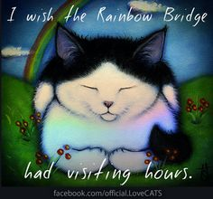 To My Dakota and Yoda and all my other Sweet Little Kitties in Heaven....I Miss You Terribly !!! XOXOXOXO
