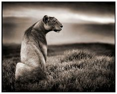 Thoughts on Photography: Nick Brandt