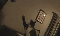 They won't ever offer you high fives. | 17 Reasons No One Should Ever Get A Cat
