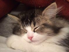 My beautiful cat, GilGil