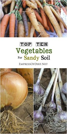 Tomatoes Gardening With Containers Sandy soil is not always easy for gardening but there several vegetables that either prefer or tolerate sandy soil conditions. Sandy soil can be improved with mulch and compost. List Of Vegetables, Organic Vegetables, Vegetables Garden, Organic Gardening Tips, Vegetable Gardening, Flower Gardening, Gardening Zones, Gardening Hacks, Kitchen Gardening