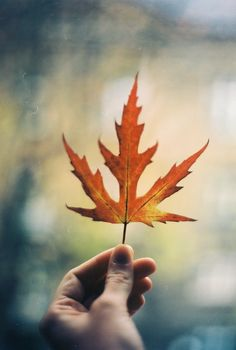 | one single leaf |
