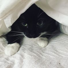 Cuz sometimes you just need a nap under covers #cute #kitty #cat #catnap #animals #cuteanimals #cute #cutecats #catlover #catlovers