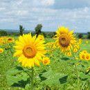 La importancia de la Agricultura Ecológica, Orgánica o Bio ecoagricultor.com
