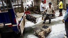 BEIJING (CHINA DAILY/ASIA NEWS NETWORK) - Celebrities including British comedian Ricky Gervais and singer Leona Lewis have shown their support for a campaign against an annual dog meat festival in China where some 10,000 dogs are expected to be killed for their meat.