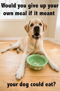 Would you give up your own meal if it meant your dog could eat?