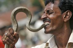 A snake charmer puts the head of a snake into his mouth as he performs at a roadside to earn his livelihood on the outskirts of Agartala