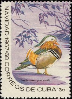 Mandarin duck - Cuba 1967