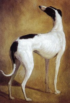 Jaques Laurent Agasse (1767-1849), Study of a Greyhound
