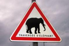 Traversée d'éléphants. Mieux vaut ralentir !