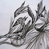 gsce art drawing of a flax flower