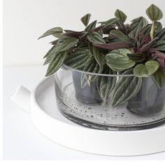 """Little greens and ceramics #blogupdate #springfeeling #green"""