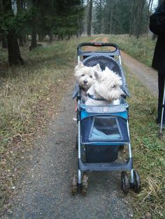 A stroller for two....Westies. ❤️