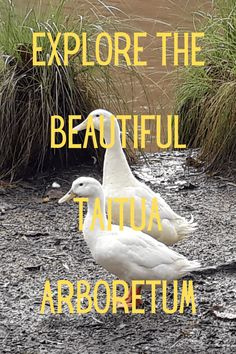 Explore the Beautiful Taitua Arboretum Most of the walkways are easy to walk so the Taitua Arboretum is an excellent location for a family day out. Nz South Island, Cycle Ride, Family Days Out, Walkways, Travel Quotes, The Locals, Hamilton, New Zealand, Places To Go