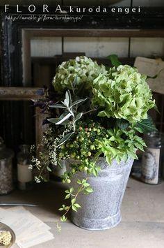 アジサイ・ノブレスの寄せ植え Container Flowers, Container Plants, Container Gardening, Green Flowers, Love Flowers, Beautiful Flowers, Hortensia Hydrangea, Interior Plants, House Plants
