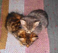 Hearts kittens .love them.❤️.Share Love ❤️ ✿ڿڰۣ ♥NYRockPhotoGirl ❤️ Love is Love. :) ❤️hearts #art #nature   ❤️.2014
