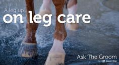 Improve your horse's health by learning more about leg care from Emma Ford on the SmartPak blog.