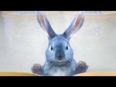 Blue Bunny Ice Cream Commercial 2016