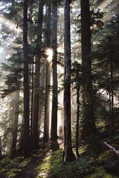 Oregon - Pacific Crest Trail Association