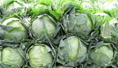 Tips for Growing Cabbage in Your Garden - How to grow cabbage from seed, how to transplant cabbage seedlings, when and how to harvest cabbage plants. - Gardening Tips Homemade Sauerkraut, Sauerkraut Recipes, Cabbage Recipes, Making Sauerkraut, Benefits Of Kimchi, Health Benefits, Cabbage Plant, Green Cabbage, Napa Cabbage