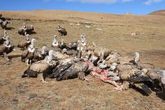 Sky burial is a Tibetan custom for giving back the earthly remains after death.
