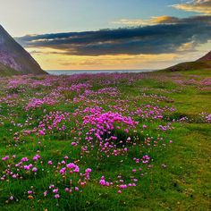 Flowers near Angel Bay, Penrhyn Bay | Flickr - Photo Sharing!  Great photo curtesy of Flickr of one of my favourite places to walk, Angel Bay below the little Orme on the north Wales coast.