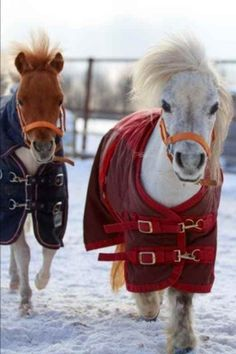 Miniature Horses in Warm Blankets Winter Journal: 150 Page Lined Notebook/Diary #Doesnotapply