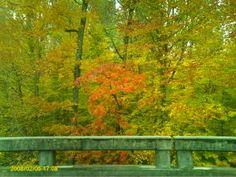 Fall over the Bridge, NC