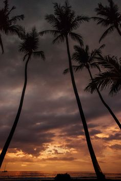 Palm trees at sunset at the Diria in Tamarindo, Costa Rica. Photographed by Kristen M. Brown, Samba to the Sea at The Sunset Shop.